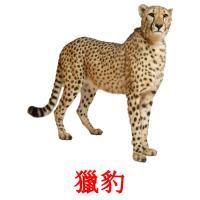 獵豹 карточки энциклопедических знаний