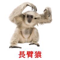 長臂猿 карточки энциклопедических знаний