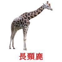 長頸鹿 карточки энциклопедических знаний