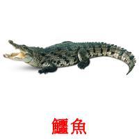 鱷魚 карточки энциклопедических знаний