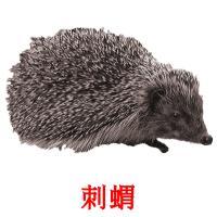刺蝟 picture flashcards