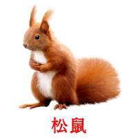 松鼠 picture flashcards