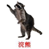 浣熊 picture flashcards