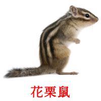 花栗鼠 picture flashcards
