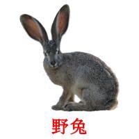 野兔 picture flashcards