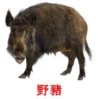 野豬 picture flashcards