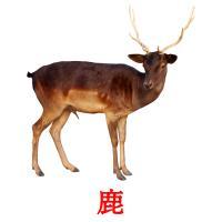 鹿 picture flashcards