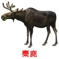 麋鹿 picture flashcards