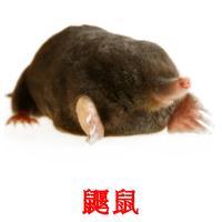 鼴鼠 picture flashcards