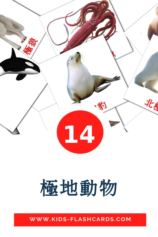 14 極地動物 Picture Cards for Kindergarden in chinese(Traditional)