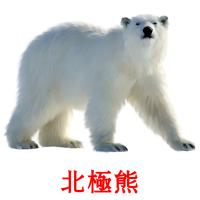 北極熊 picture flashcards