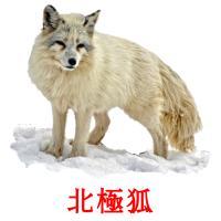 北極狐 picture flashcards