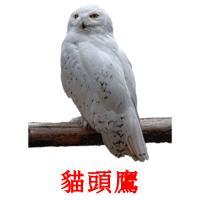 貓頭鷹 picture flashcards