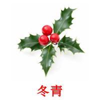 冬青 picture flashcards