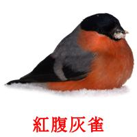 紅腹灰雀 picture flashcards