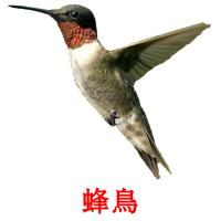 蜂鳥 picture flashcards