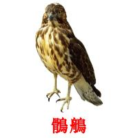 鶻鵃 picture flashcards