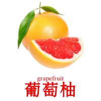葡萄柚 picture flashcards