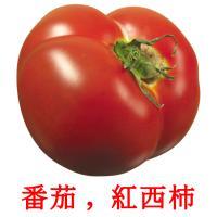番茄 ,  紅西柿 picture flashcards