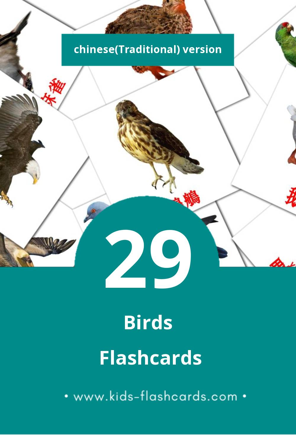 Visual 鳥兒 Flashcards for Toddlers (16 cards in Chinese(Traditional))