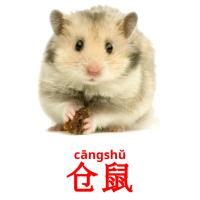 仓鼠 picture flashcards