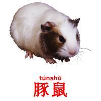豚鼠 picture flashcards