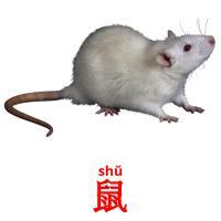 鼠 picture flashcards