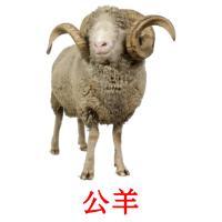 公羊 picture flashcards
