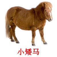 小矮马 picture flashcards