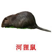 河狸鼠 picture flashcards