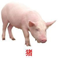 猪 picture flashcards