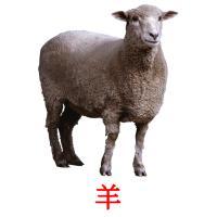 羊 picture flashcards