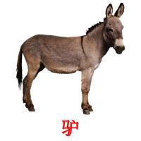 驴 picture flashcards