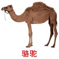 骆驼 picture flashcards