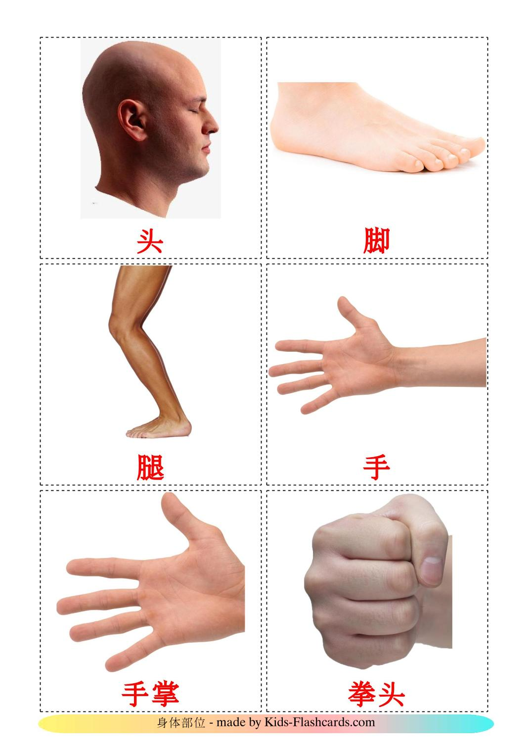 Body Parts - 26 Free Printable chinese(Simplified) Flashcards