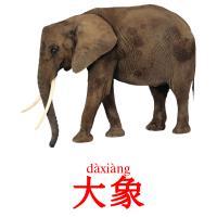 大象 picture flashcards