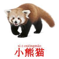 小熊猫 picture flashcards
