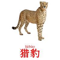 猎豹 picture flashcards