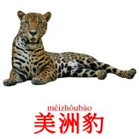 美洲豹 picture flashcards
