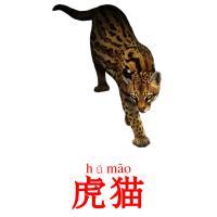 虎猫 picture flashcards