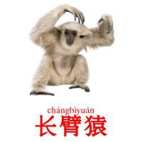 长臂猿 picture flashcards