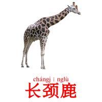 长颈鹿 picture flashcards
