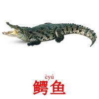 鳄鱼 picture flashcards