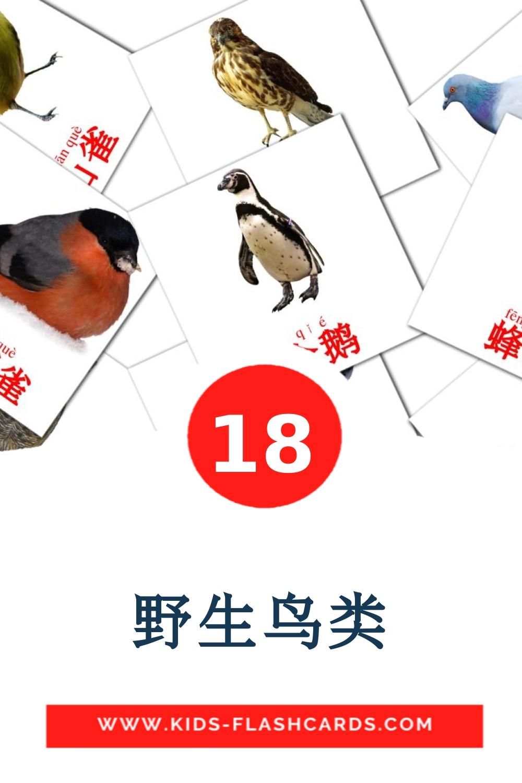 18 野生鸟类 Picture Cards for Kindergarden in chinese(Simplified)