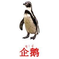 企鹅 picture flashcards