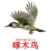 啄木鸟 picture flashcards