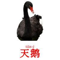 天鹅 picture flashcards