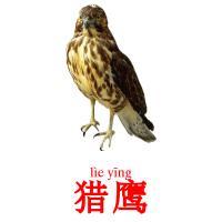 猎鹰 picture flashcards