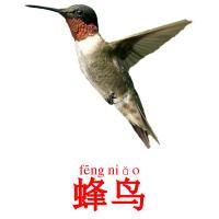 蜂鸟 picture flashcards