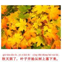 秋天到了,叶子开始从树上落下来。 picture flashcards